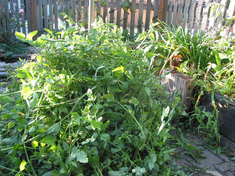 the pile of plants... it bodes well for next year