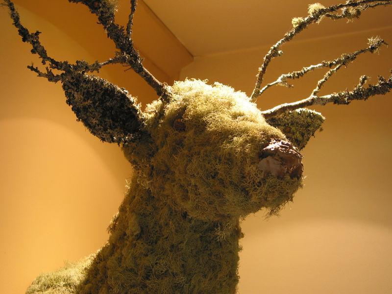 Deer nose. he isn't creepy, trust me