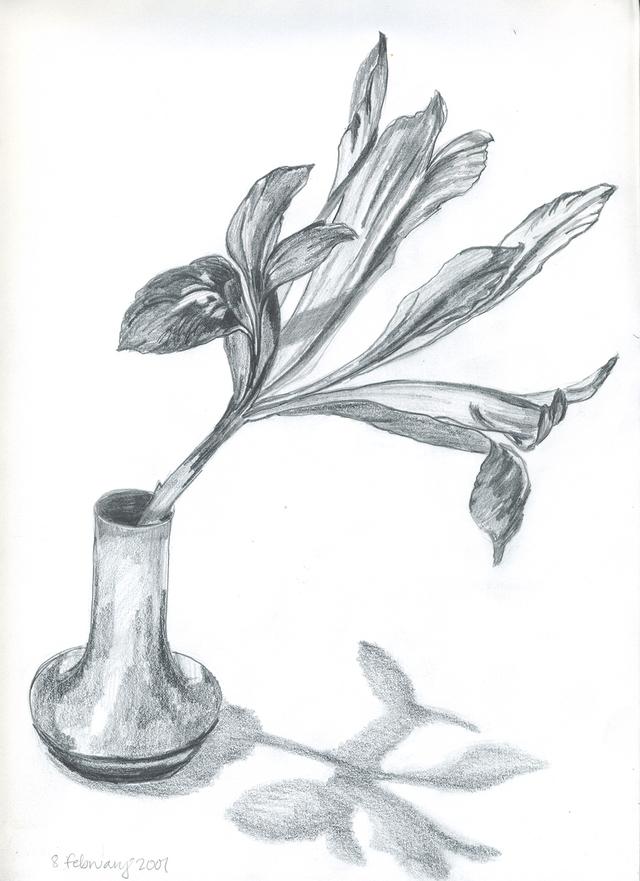rock garden iris