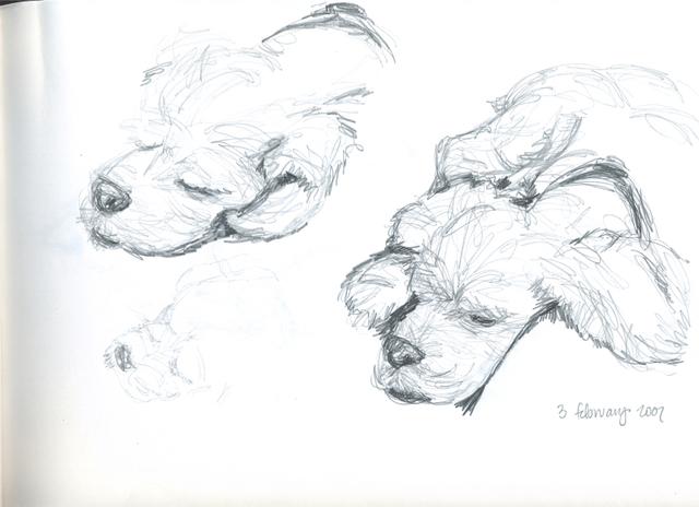 studies of chettie's head